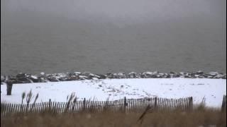 Red Fox Sighting in Ocean View, Willoughby, Norfolk, VA