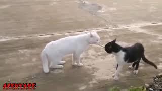 Video Lucu Kucing Asli Bikin Ketawa Ngakak PlanetLagu com