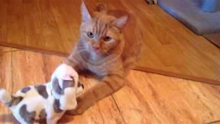Как коты отнеслись к заводной мягкой игрушке.