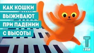Как кошки выживают при падении с больших высот || science insider на русском