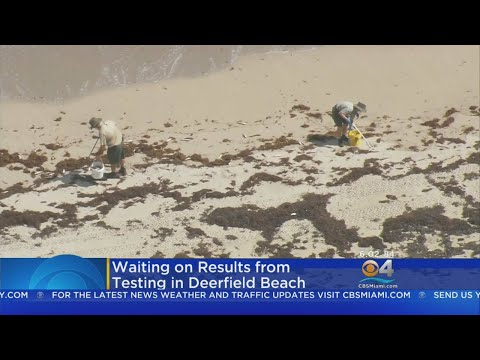 Stichiz - Why Miami Dade Beaches Are Closed