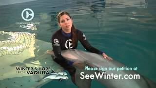 abby-stone-speaks-out-about-the-vaquita