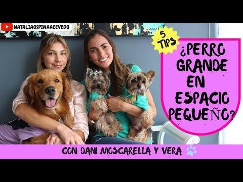 ¿Puedo tener un perro grande en un apartamento? - Ft  Daniella Moscarella y Vera!!