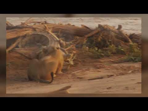 Свирепые битвы животных в дикой природе - Видео онлайн