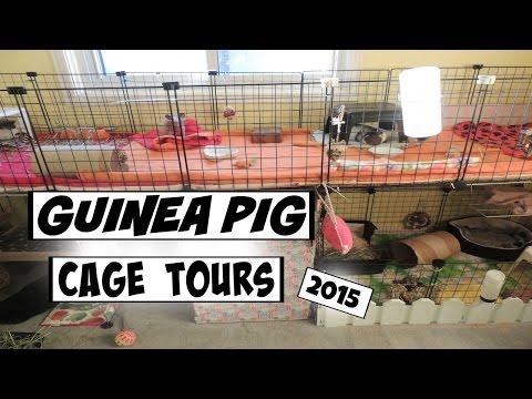Guinea Pig Cage Tours // 2015
