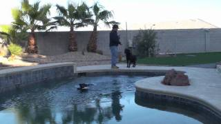 Dog Training - Jumping In Water