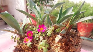 Creative Rock Planter Idea || How to Grow Plants on Rock || Fun Gardening || 15 Nov, 2017
