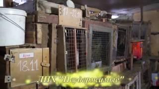 ЛПХ Неудержимые - Почему у кроликов такие клички...