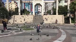 Güvercin sevgimiz