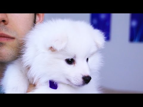 NAME MY PUPPY (YIAY #231)