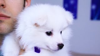 Download NAME MY PUPPY (YIAY #231) Mp3 and Videos