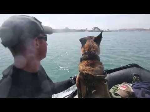 1st MSOB Multi-Purpose Canine Team Participates in Amphibious Training
