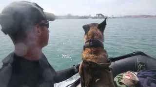 1st Msob Multi-purpose Canine Team Participates In Amphibious Training