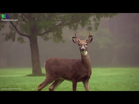 """""""Earth's Beautiful West"""" Relaxation Nature Video with 3 Gymnopédies"""