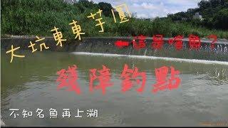 波爸釣魚趣- 台中大坑大里溪探訪 (Taiwan/Lure Fishing/路亞/溪釣/溪哥/闊嘴郎) (201808)