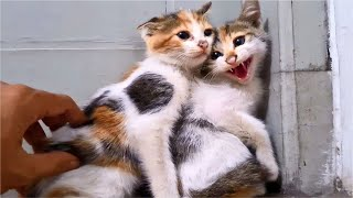 The Rescue KITTENS ANGRY And HISSING At Me, I Try To Calm Down Scared Kittens  Cats Meowing