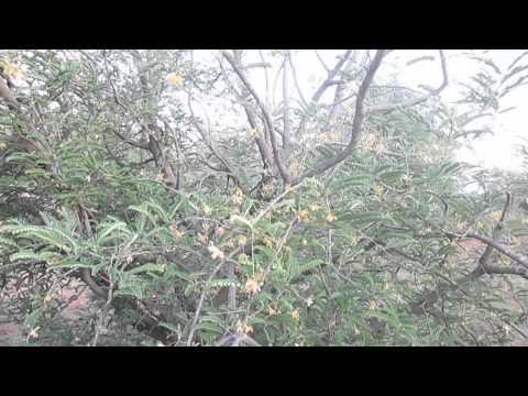Vanageri Farmhouse-2014-video ,Koppala district,Karnataka