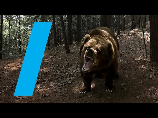Wild With: Bears (360 Video)