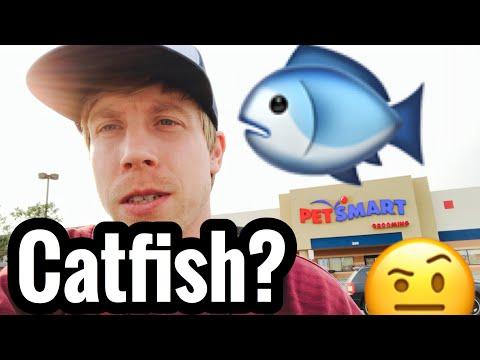 PetSmart Catfish Choices? Best Algae Cleaner Fish