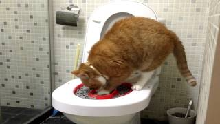 Litter Kwitter Success - Cat Toilet Training - Caramel The Incredible