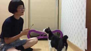 讓貓咪乖乖剪指甲教學篇