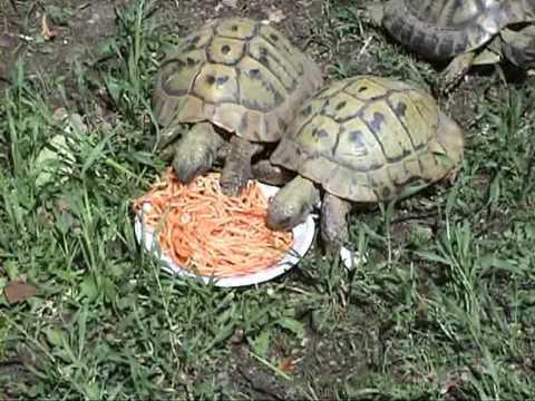 Pianoro gatti al bar e spaghettata fra tartarughe youtube for I gatti mangiano le tartarughe