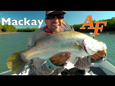 Lure Fishing Near Mackay Barra Crocs And Transam Copies Andysfishing Fishing Video EP.221