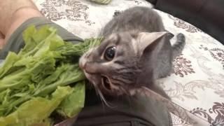 Кошка ест траву? Cat is eating grass?