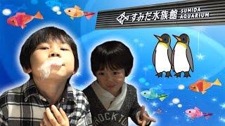 おでかけ動画☆水族館にかわいいペンギン・魚さんを見る仲良し兄弟brother4