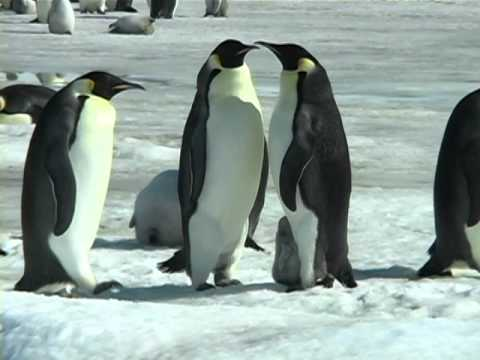 Emperor of the Antarctic- full