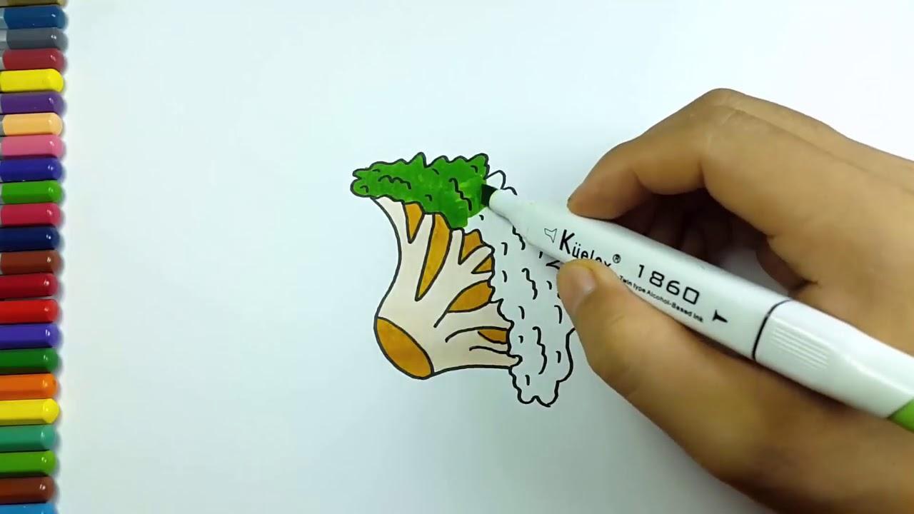 Cara Menggambar Mewarnai Sayuran Brokoli Youtube