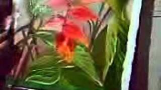 TELA DE HELICONIAS.composé floral II