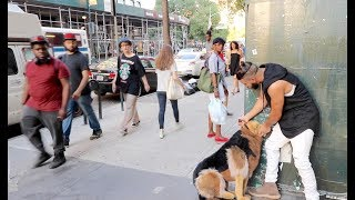 ABUSING DOG EXPERIMENT!!