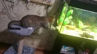 Кошка Мура