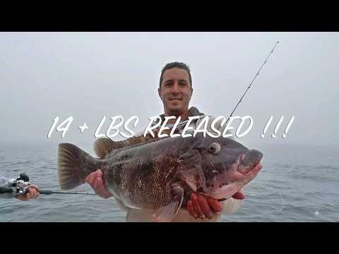 JUMBO HOG BLACK FISH ( TAUTOG ) In O.C. MD Aboard Fish Bound Charters 4/9/19