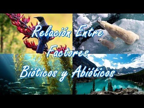Factores bioticos y abioticos yahoo dating