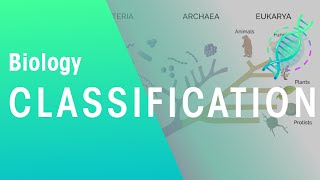 How are organisms classified? | Biology for All | FuseSchool