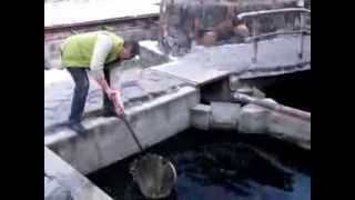 Замовлення та вбивство осетра, рибний ресторан, Гюмрі, Вірменія