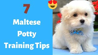 7 Easy and Working Tips to Potty train your Maltese puppy | Maltese Potty Training Tips |