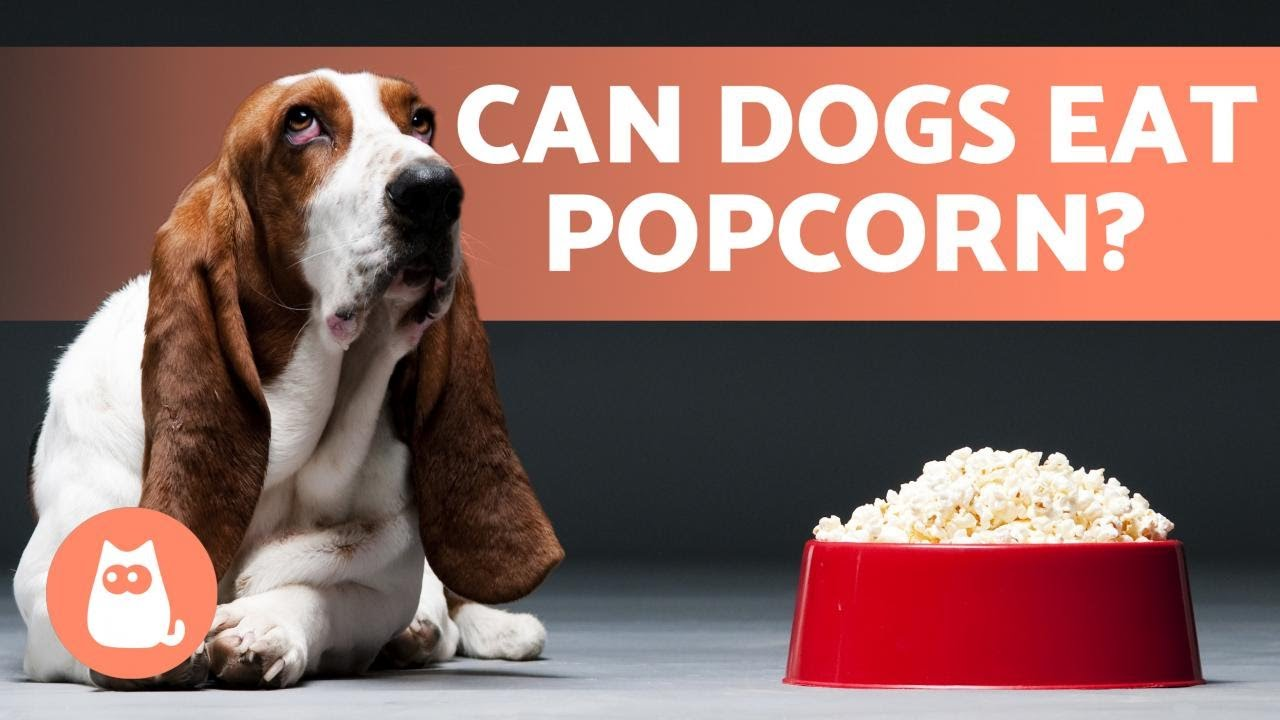 Popcorn for Dogs - Can They Eat It