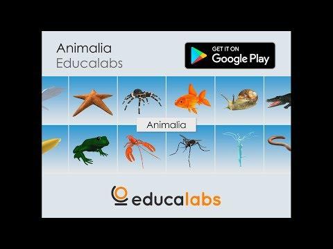 Animalia Educalabs – Apps bei Google Play