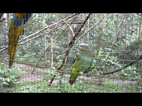Day6 (Animal Rescue Center, Amazon) - amaZOOnico BIRDS 10 Day Ecuador & Amazon Adventure (May 2014)