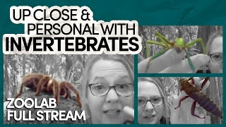 Georgie Jefferies // ZooLab: Up Close And Personal With Invertebrates // Inspiring Guest Full Stream