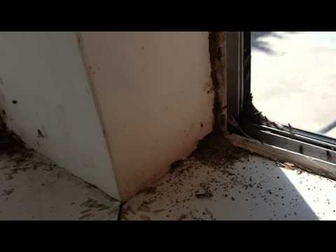 Swarming termites flying ants