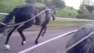 gypsy horse road runner vs black sally , gable carey & billy hibbs