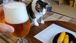 猫とトウモロコシとビールとで、のんびり過ごした休日