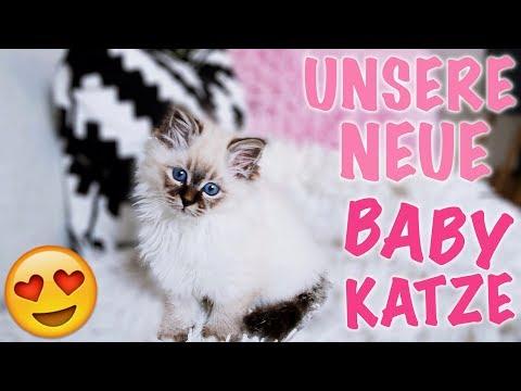Unsere 1. Babykatze! abholen, eingewöhnen und kuscheln! I Meggyxoxo