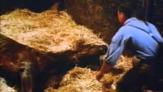 PHAR LAP - LEGENDE EINER NATION - Trailer Deutsch