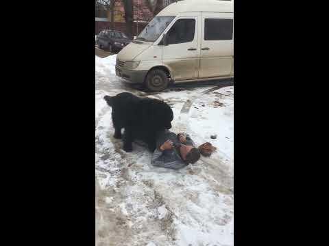 Пес хочет мужика)
