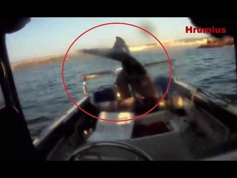 нападение мегалодона на лодку